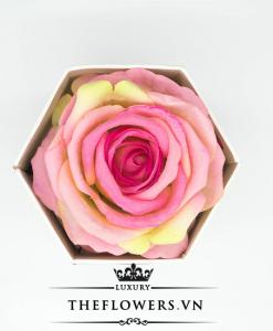 Hoa hồng một bông màu hồng