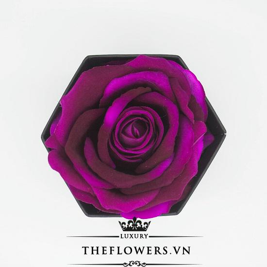 Hoa hồng một bông màu tím