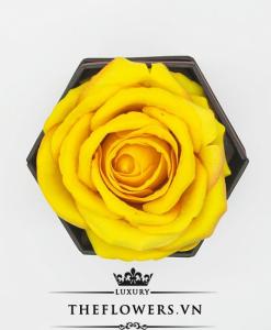 hoa hồng một bông màu vàng hộp hình lục giác