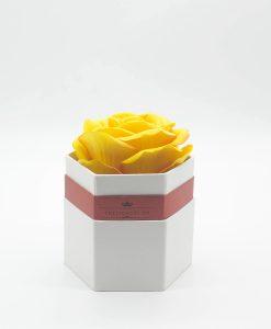 Hoa hồng một bông màu vàng hộp lục giác màu trắng